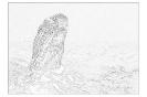 ptic_118