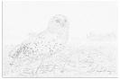 ptic_120