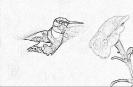 ptic_12