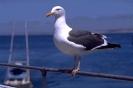ptic_25