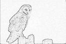 ptic_38