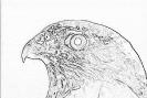 ptic_44